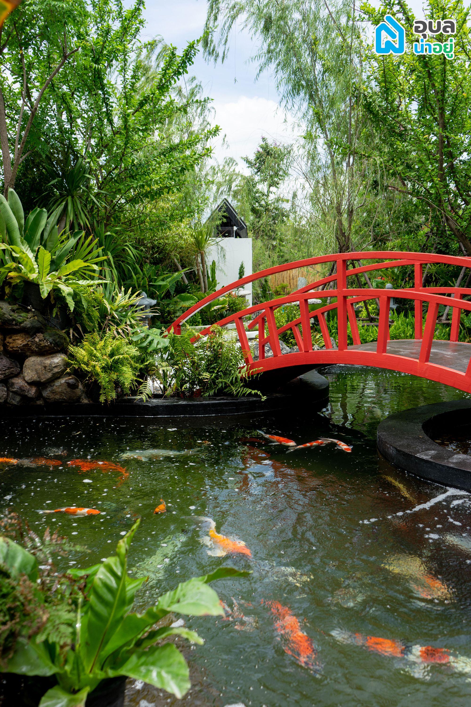 Ai Garden Café & Studio - บ่อปลาคาร์ฟ